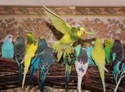 Продаются попугаи от заводчиков