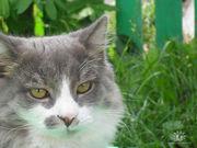 Отдам в добрые руки 4х месячных котят и 9ти месячных котиков и кошечек
