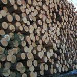 Лес кругляк тонкомер сосна липа  от 15 см - 4-6м.