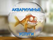 Чистка аквариумов Пенза. Обслуживание аквариумов Пенза.